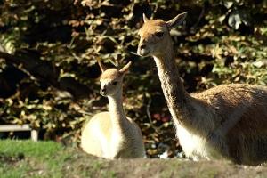 Alles im Überblick: Mama Gisela erkundet mit ihrem Baby den Südamerika-Park.