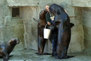 Bussi, Bussi: In Wien haben die Robben gelernt, wie sie zu etwas kommen...